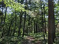 32 Cedars Trail, Pinery Provincial Park.jpg