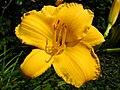 4521 - Bern - Rosengarten - Flower.JPG