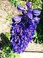 4710 - Mürren - Flowers.JPG