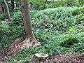 5 Chome Jindaiji Motomachi, Chōfu-shi, Tōkyō-to 182-0017, Japan - panoramio (8).jpg