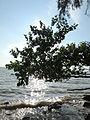 5 beach 3.JPG
