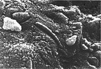 Formación en un meteorito marciano que se creia que era una bacteria.