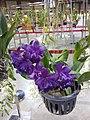 APOC 12 - orchid exibition in Bangkok (2016) (27374858131).jpg