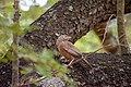 A Bird in Wilpattu National Park 02.jpg