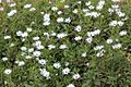 A Collection of Flowers from Ooty003.jpg