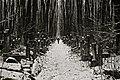 A Corridor (16189754116).jpg