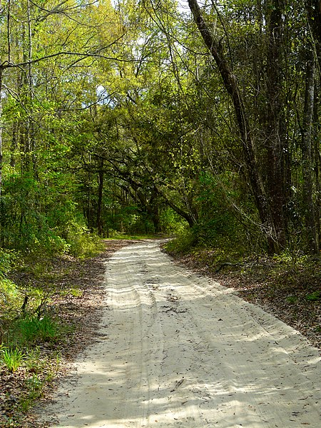 Archivo:A Country Road In Jefferson County, Florida.jpg