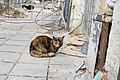 A feral cat in Varna, December, 2018-7.jpg