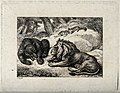 A lion and a bear snarling at one another. Etching by W-S Ho Wellcome V0021504.jpg