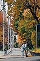 A man gathering sweeping leaves (38724994912).jpg