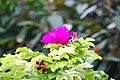 A wildflower.jpg