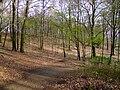Aaper Wald in Düsseldorf DSCF1417.jpg
