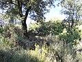 Abella de la Conca. Sant Miquel d'Abella 5.JPG