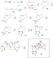 Absinthin Biosynthesis.png