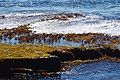 Acadia 2012 08 24 0087 (7958595998).jpg
