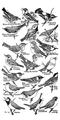 Accompany Manual of Bird Study-0006.png