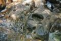Adams Brook (near East Dover, Green Mountains, Vermont, USA) 5 (49439054152).jpg