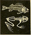 Advanced biology (1929) (17752557059).jpg