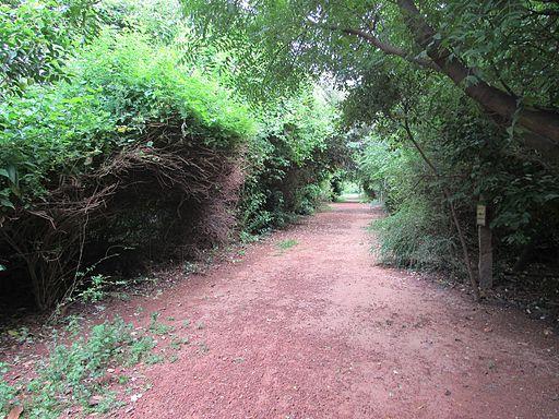 Adyar-Tholkappiya-Poonga-Park-Chennai-India-6