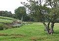 Afon Teifi, Ceredigion - geograph.org.uk - 563729.jpg