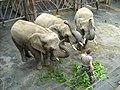 Afrikanische Elefanten im Zoo Dresden.jpg