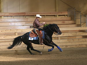 Reining - Circles are performed at speed