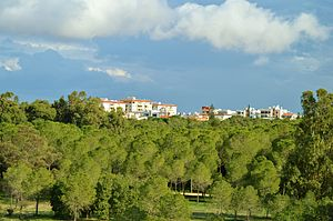 Alsos Akadimias Forest National Park view of Nicosia Pallouriotissa area Republic of Cyprus 2014.jpg