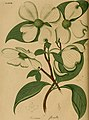 American medical botany, being a collection of the native medicinal plants of the United States, containing their botanical history and chemical analysis, and properties and uses in medicine, diet and (14764295552).jpg