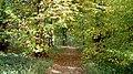 An Autumnal Stroll - geograph.org.uk - 335818.jpg