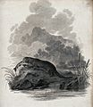 An otter sitting on a rock in the river having just caught a Wellcome V0020740.jpg