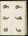 Animal drawings collected by Felix Platter, p2 - (107).jpg