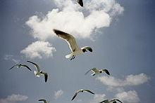 Antigua birds.jpg