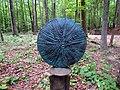 Art in the Garden Hillsborough NC 3655 (35303456084).jpg