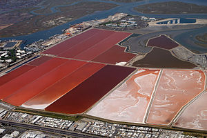 Anostraca - Salt evaporation ponds at Redwood City on San Francisco Bay: the orange colour is produced by the presence of Artemia.