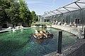 Artis California sea lions (35849364050).jpg