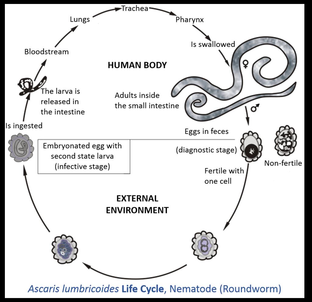 Parasites On Emaze
