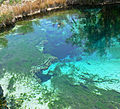 Ash Meadows Crystal Spring 2.jpg