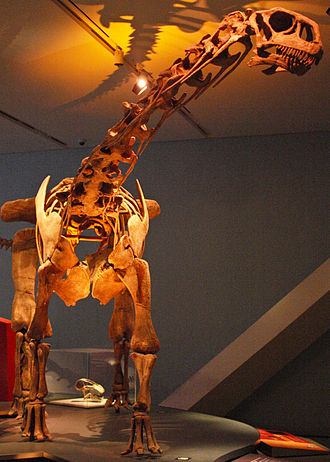 Lithostrotia - Malawisaurus skeleton, Royal Ontario Museum