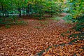 Autumn at Minnowburn near Belfast (5) - geograph.org.uk - 599623.jpg