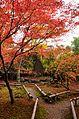 Autumn foliage 2012 (8252565415).jpg