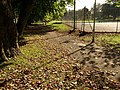 Autumn leaves, Upton Park - geograph.org.uk - 1005081.jpg
