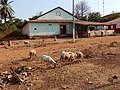 Avenida Amílcar Cabral, Bolama, Guiné-Bissau – 2018-03-03 – DSCN1343.jpg