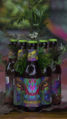 AyahuascaBottle.png