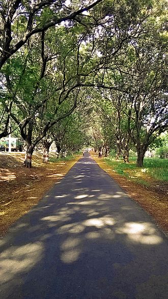 BHEL Township, Hyderabad - BHEL Side Road in Autumn