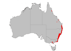B spinulosa dist map.png