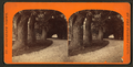 Ball's carriage road, and showing the orange archway in the distance. St. Augustine, Fla, from Robert N. Dennis collection of stereoscopic views.png