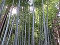 Bamboo Kairakuen (201571301).jpeg