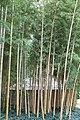 Bambouseraie de Prafrance 20100904 010.jpg