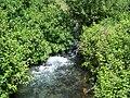 Banias River08.jpg