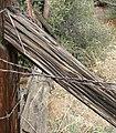 Barbed Wire, Oakmont Park, Redlands, CA 1-2012 (6803052801).jpg